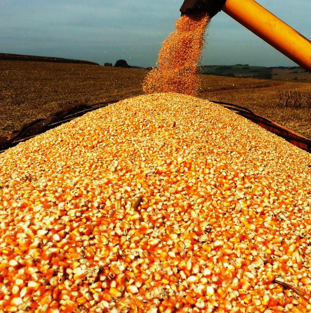 Colheita de milho - Valdir Fries