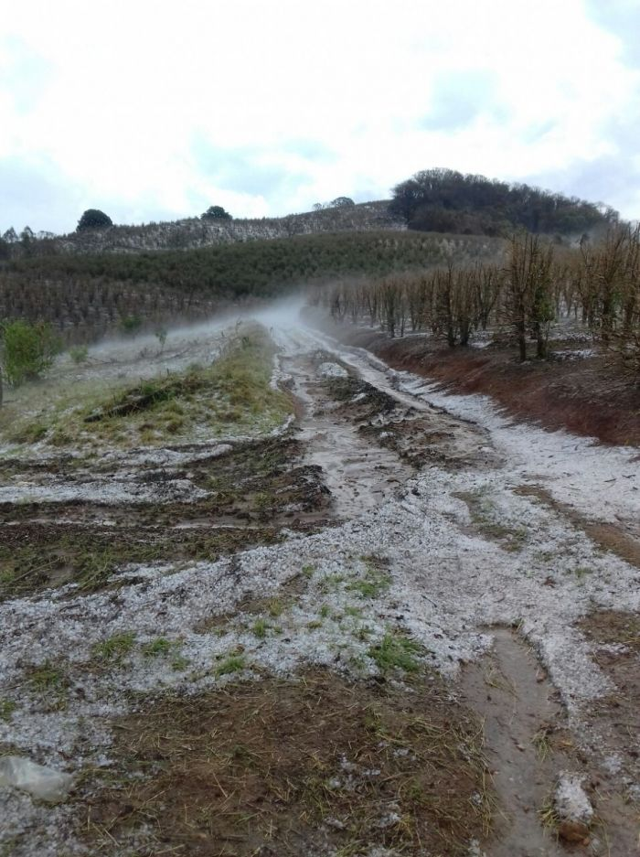 Chuvas de granizo em Monte Belo (MG). Imagens do produtor Marcílio Barbosa de Lima